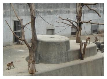 岡崎 東公園 動物園 サル