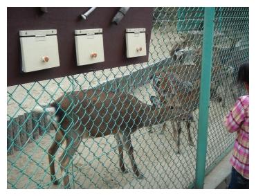岡崎 東公園 動物園 鹿