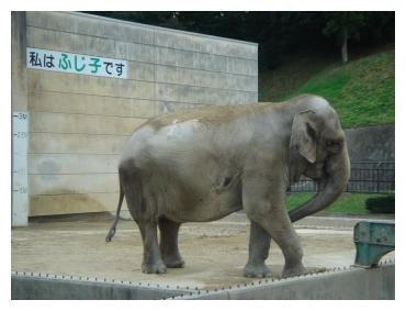 岡崎 東公園 動物園 象