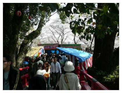 岡崎公園 出店 桜