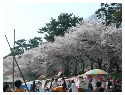 岡崎公園乙川土手の桜