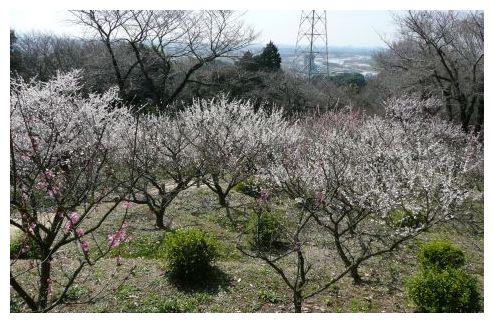岡崎梅の丘